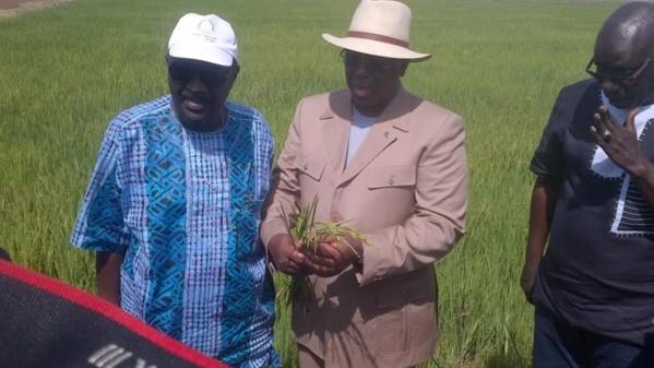 Contribution-Excellence Macky SALL, pitié ressaisissez-vous : il n'ya pas de TVA sur le riz local !