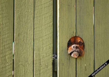 Je te vois !
