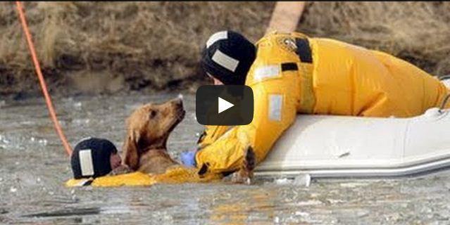 Ces gens n'ont pas hésité à secourir des animaux en danger, une vidéo qui redonne foi en l'humanité