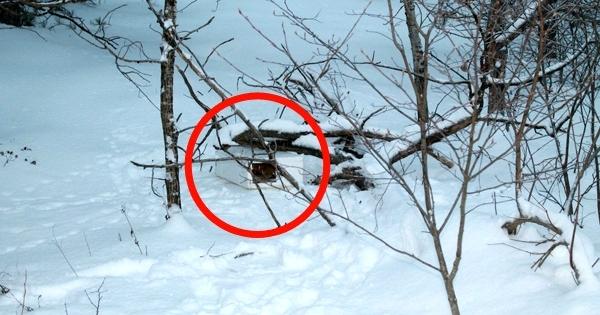 Un père de famille a trouvé une étrange boîte dans la neige ! Rien n'aurait pu les préparer à ce qu'ils vont trouver à l'intérieur...
