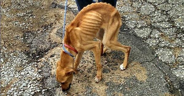 Un éboueur sauve un chien jeté à la poubelle par son maître. Cette histoire va vous briser le coeur !