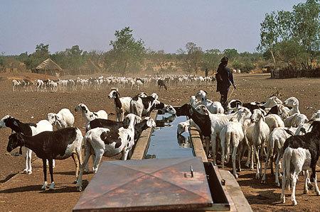 Adoption du nouveau code pastoral, un soulagement pour les éleveurs