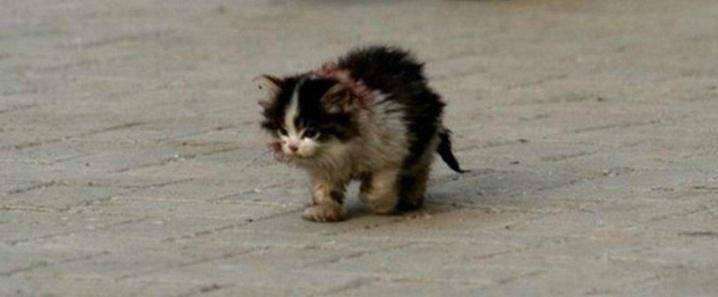 Une histoire déchirante : J'ai touché le chat, qu'on disait à tout le monde de ne pas le toucher
