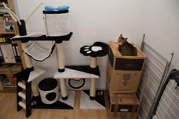 La logique des chats enfin expliquée, en 20 photos...