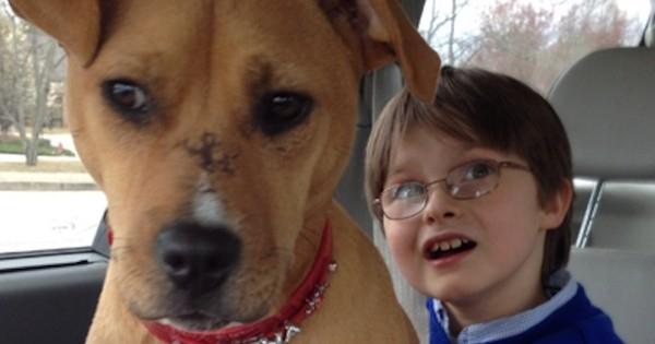 Une famille a adopté un chiot maltraité pour leur fils qui souffre d'autisme, ils ne savaient pas à quel point la vie allait changer pour eux !