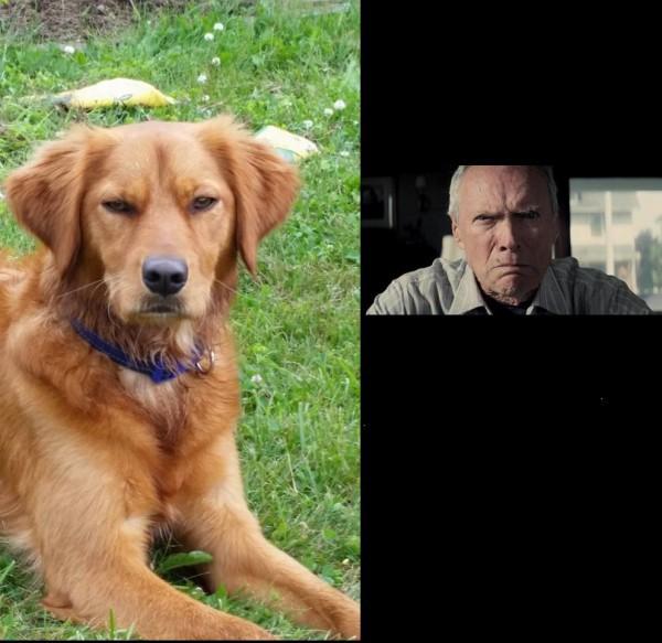 Top 5 des chiens qui ressemblent à quelque chose d'autre, les look-alike canins