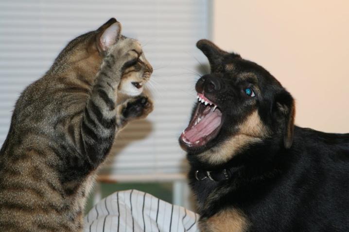 Propriétaire de chat vs. propriétaire de chien : qui est le plus intelligent ? L'étude qui fait beaucoup parler...