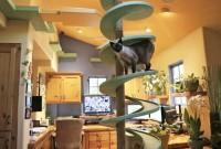 Une maison transformée en paradis pour chats