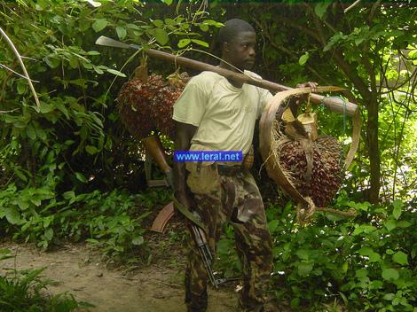 Casamance : de jeunes chômeurs présentés comme des rebelles repentis envoyés à Dakar