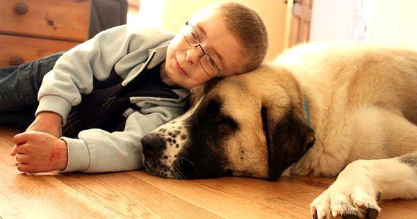 La vie de ce petit garçon atteint d'une anomalie génétique était un enfer, jusqu'à ce qu'il rencontre ce chien à trois pattes !
