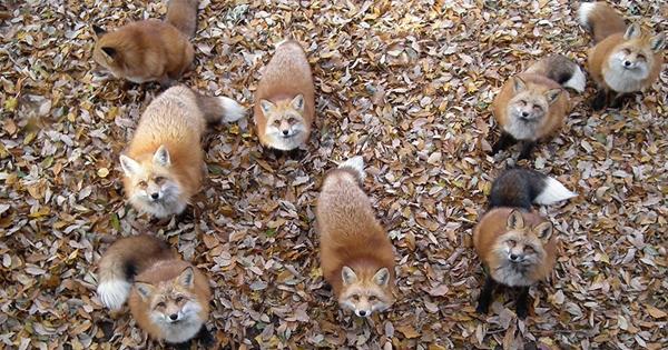 On a trouvé l'endroit le plus mignon au monde : un village de renards !