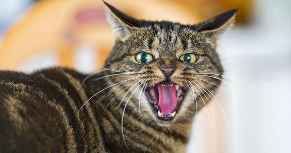 Voici quelque raisons de détester encore plus les chats !
