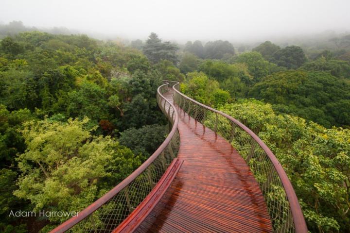 Dans la ville de Cap, une passerelle vous permet de vous balader au dessus des arbres ! La vue est superbe...