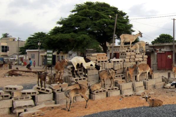 """Témoignage de la mère d'un des Sénégalais morts dans le naufrage en Méditerranée : """"J'ai vendu plus de 80 chèvres pour faire partir mon fils"""""""