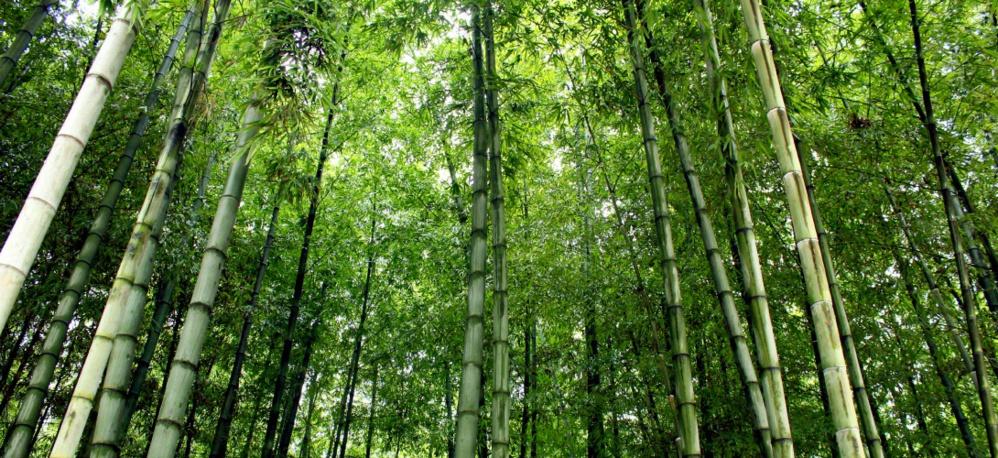 La Chine construit un mur d'arbres pour lutter contre le réchauffement climatique