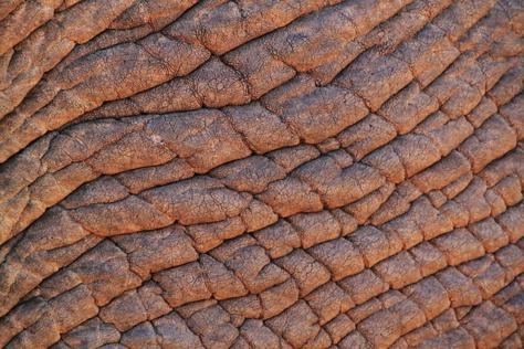 Trafic de peaux d'éléphants: Les deux fils de Yoro Lam et leurs collègues recouvrent la liberté