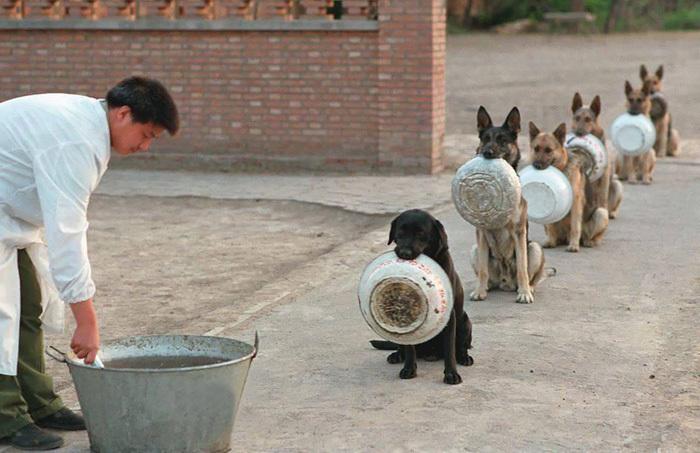 Ces chiens policiers savent mieux faire la queue devant la cantine que nous... Le labrador est trop drôle, on dirait qu'il demande du rab' !