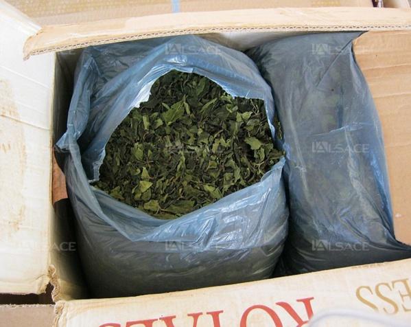 Saisie de 206 kg de drogue Khat : Deux Sénégalais mis sous mandat de dépot
