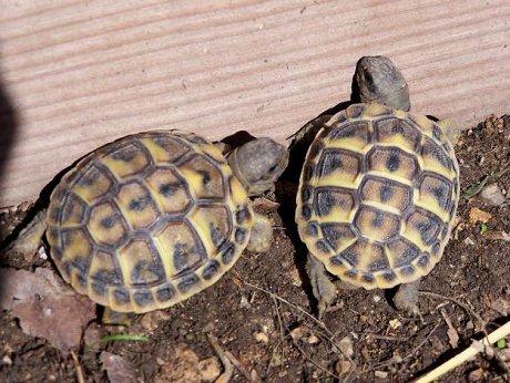 Madagascar : une Egyptienne arrêtée avec 403 tortues dans ses valises