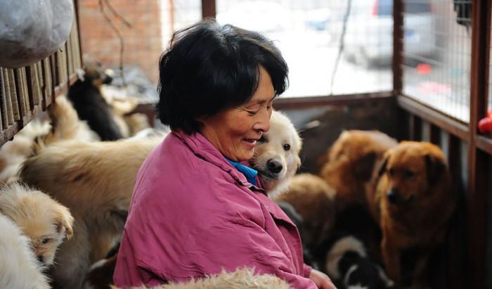 Une chinoise sauve 100 chiens au Yulin Festival