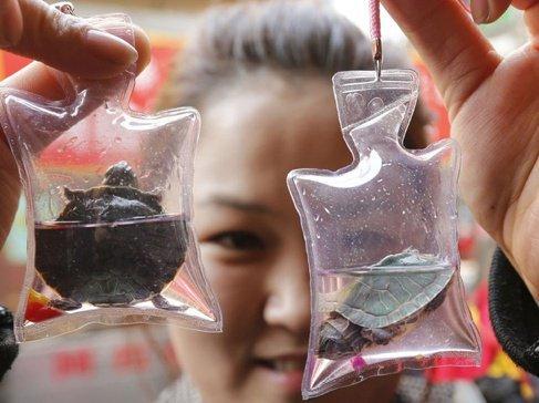 Chine : De petits animaux enfermés dans des portes-clés font le bonheur des touristes