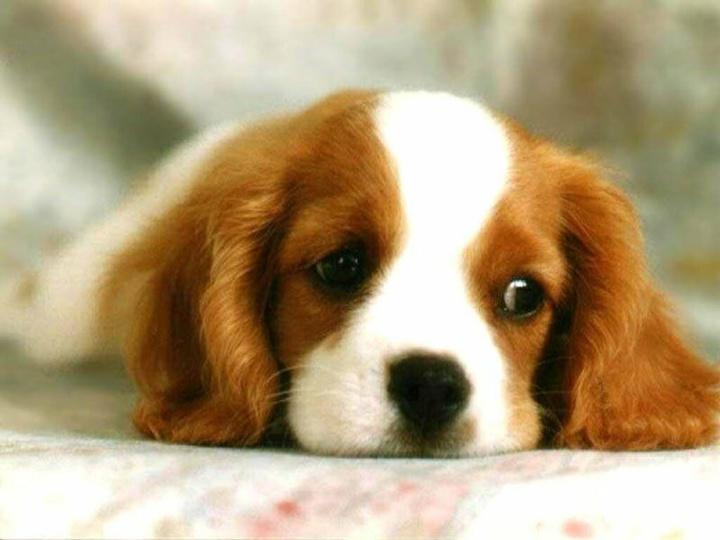 Un homme maltraite son chien, tout l'immeuble l'entend ! Son voisin lui laisse un mot pas comme les autres pour qu'il cesse cet acte ignoble !