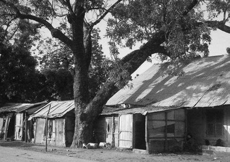 Khay Senghor à Keur Madiabel : L'arbre où Léopold Sédar Senghor a été molesté