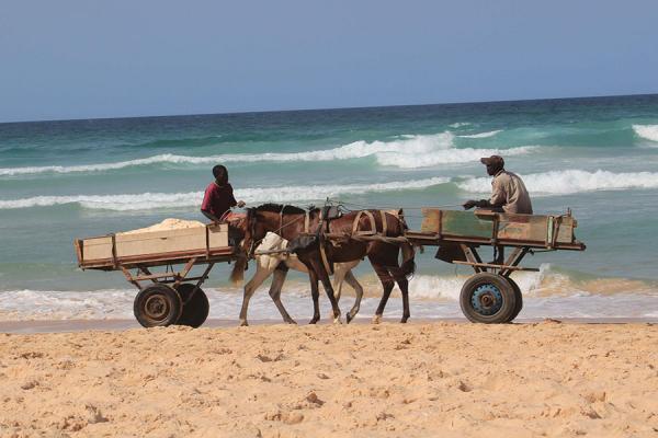 Extraction frauduleuse de sable marin à Gadaye: Bataille rangée entre charetiers et agents des eaux forêts