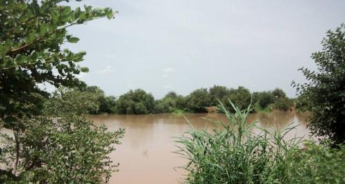 Pluies diluviennes dans le Nord du Pays : Des rizières de Maka Diama, Ronck, Rosso Sénégal et Richard Toll sous l'emprise des eaux