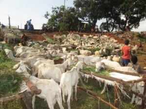 Bamako: A quelques jours de la fête de tabaski : Les moutons vendus à prix d'or