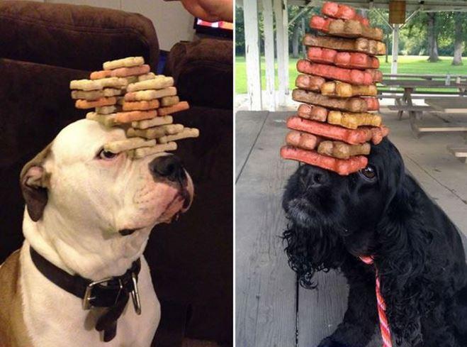 16 chiens qui font preuve d'une patience et d'une agilité impressionnante ! Excellent !