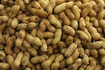 Commercialisation de l'arachide : Le prix fixé à 200 FCfa
