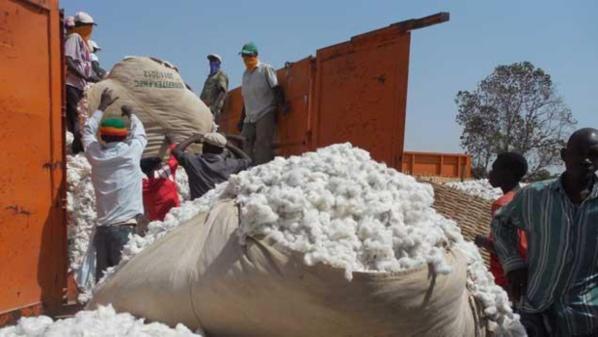 A Nairobi, l'OMC parvient à un accord très profitable à l'Afrique dans le dossier du coton