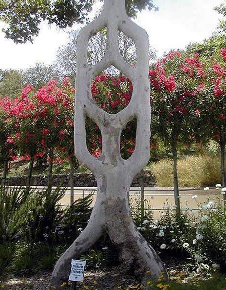 Il a passé 40 ans de sa vie à transformer des arbres en véritables œuvres d'art, et le résultat est vraiment bluffant ! Du jamais vu...