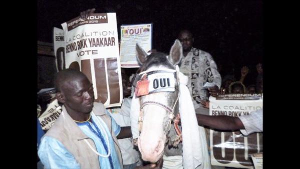 Fass Thiékène: Les apéristes mettent fin à l'invincibilité de El hadji Mohamed Dieng