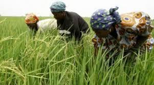 "Saliou Sarr Asprodeb : « L'autosuffisance en riz ne sera pas atteinte en 2017"""