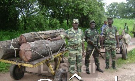 Kolda: 26 trafiquants de bois condamnés à des peines fermes de 6 mois à 2 ans