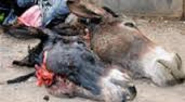 240 tonnes de viande d'âne ont été enregistrées en 2015, selon les professionnels de la viande et du bétail