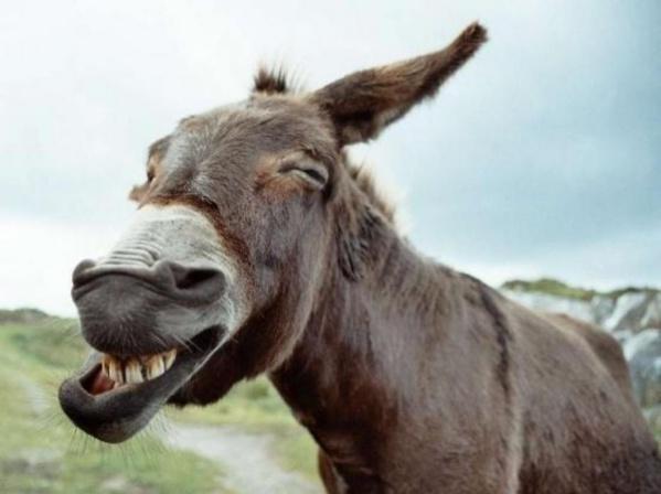 Consommer de la viande d'âne n'est pas dangereux pour la santé, selon un technicien de la santé