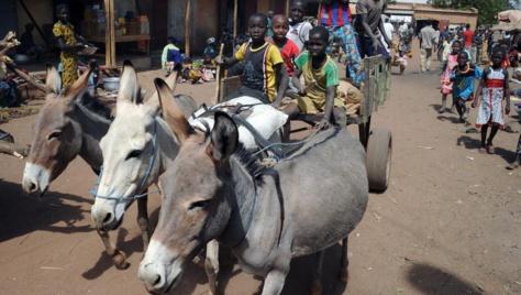 Des ânes conduits par des enfants au Mali, en 2013.
