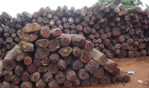 Trafic de bois : Une dizaine de camions gambiens et des centaines de troncs saisis par l'Armée