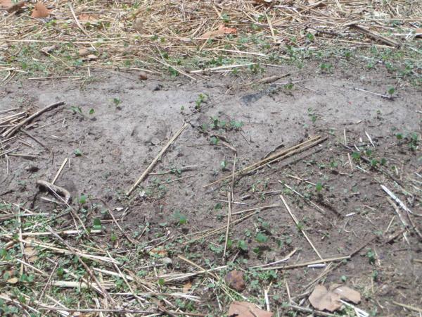 Photos: Fandana: Les trafiquants de bois s'attaquent à un cimetière
