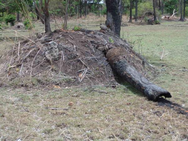 Lutte contre le trafic du bois à Bignona : 112 personnes interpellées et un impressionnant lot de matériels saisi