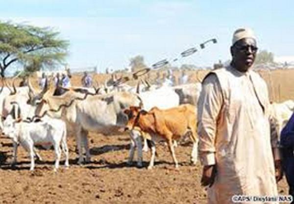 Haut Conseil des Collectivités Territoriales : Les éleveurs de la nouvelle génération veulent leur part du gateau