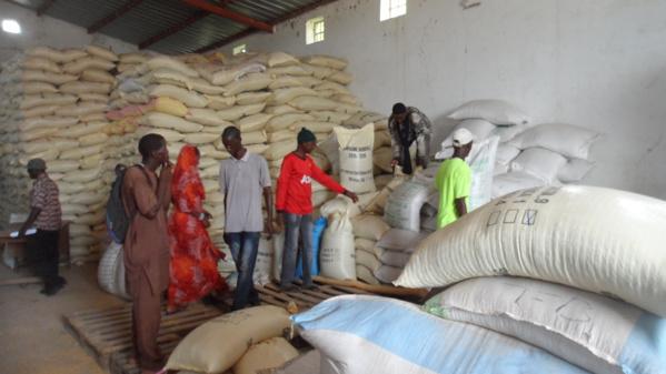 Atteinte de l'autosuffisance en riz : Dr Waly Diouf répond à ses détracteurs