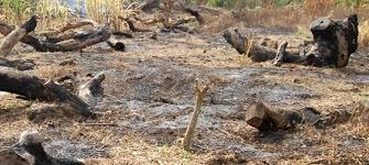 La coupe abusive de bois n'est pas l'apanage de la Casamance Monsieur le Président de la République... - Par Demba Sow