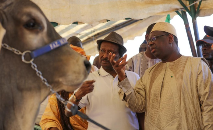 Contrôle du Pétrole : Comment Baba Diao se positionne……