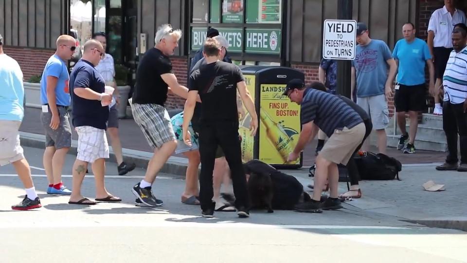 Un pitbull déchiquette une femme et son chien