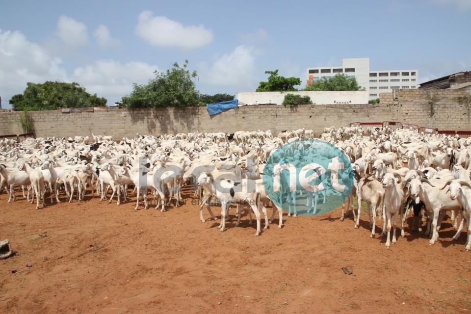 Tabaski 2016 : 1371 moutons distribués aux familles démunies de la part du Président
