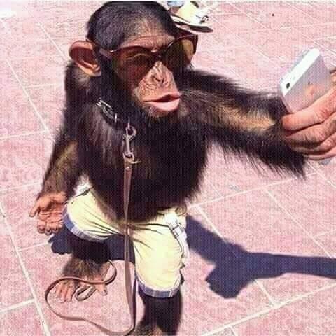 Affaire de selfie !!! Soyez-prêts